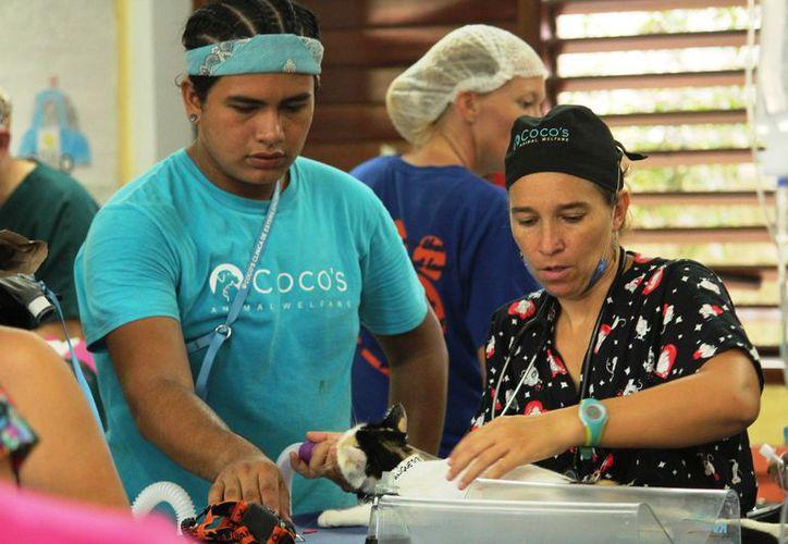 Piden donativos para esterilizar mascotas en Playa del Carmen - Sipse.com
