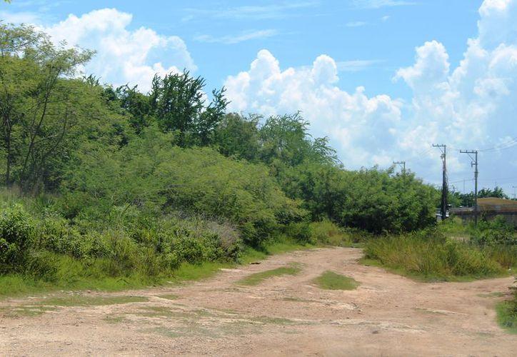 La Agepro realiza procedimientos para recuperar mil hectáreas, propiedad de Quintana Roo, que están invadidas. (Daniel Tejada/SIPSE)