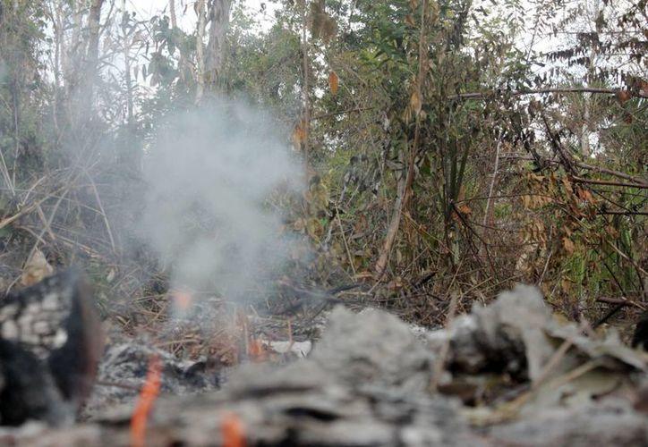 La temporada de incendios forestales de este año inició el 15 de enero y culminó el 15 de junio: se presentaron 71 conflagraciones con una afectación de 24 mil hectáreas siniestradas. (Archivo/SIPSE)