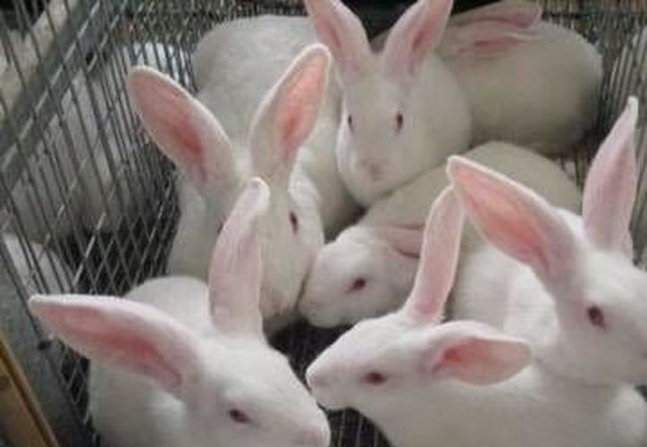 Se brindarán asesorías para el cuidado y atención del criadero de conejos. (Foto: Archivo)