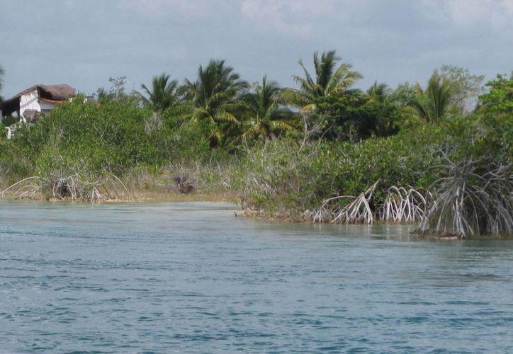 Se está generando un excedente de materia orgánica que se está filtrando a la laguna. (Javier Ortíz/ SIPSE)