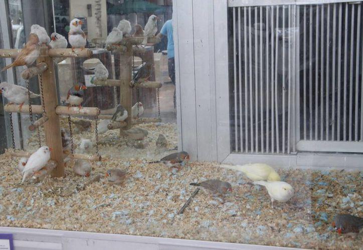 La comercializadora decidió tomar un nuevo manejo ambiental en pro de los animales. (Tomás Álvarez/SIPSE)