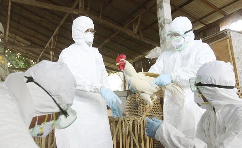Los casos fueron confirmados el 9 de marzo y hasta el momento no se ha identificado ninguna asociación epidemiológica entre ellos. (Archivo/AP)