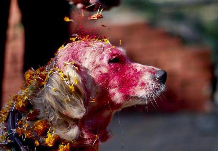 Este 30 de octubre Cancún se sumará al Festival Kukur Thiar, que rinde homenaje a los perros. (br.financas.yahoo.com)