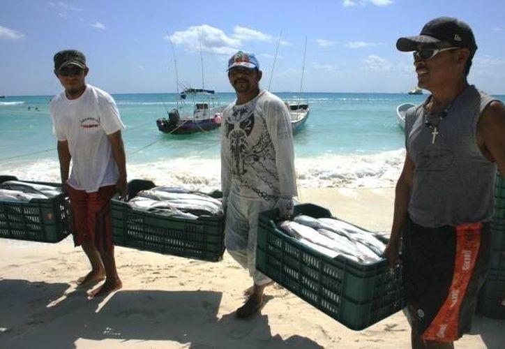 """Hoy el precio del mero es de 110 pesos en supermercados o mercados, mientras que """"bajando del barco"""" se adquiere entre 60 a 70 pesos. (SIPSE)"""