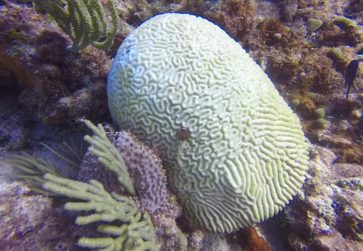 """Los corales afectados pertenecen al Parque Nacional """"Costa Occidental de Isla Mujeres. (De la redacción)"""