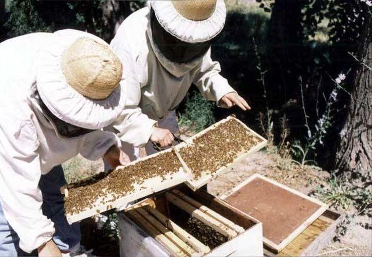 Expertos e instituciones desarrollaron un proyecto que permitirá implementar programas productivos para los apicultores. (Foto de Contexto/elciudadano.cl)