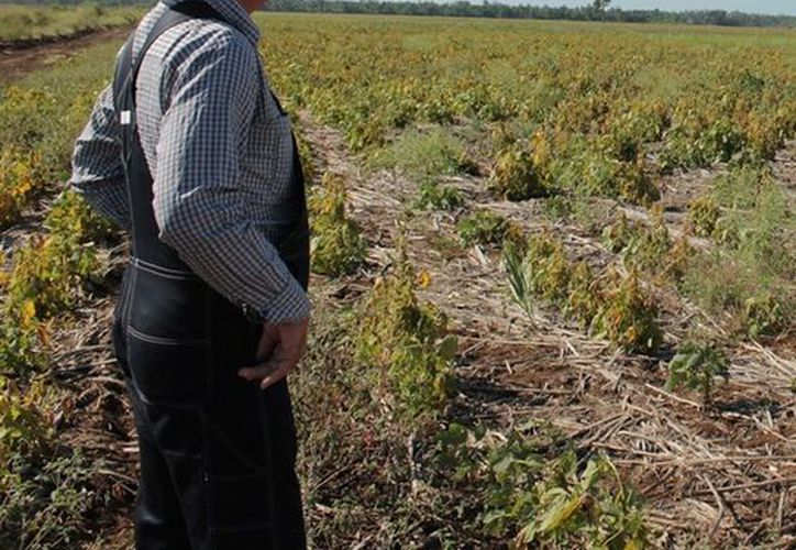 Los programas sociales en beneficio a los productores serán revisados con el propósito de fortalecerlos. (Edgardo Rodríguez/SIPSE)