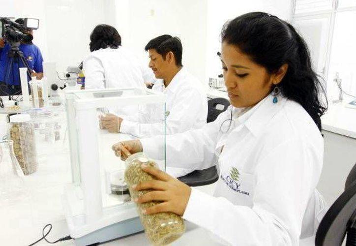 Estudiantes de Texas conocieron de cerca la investigación en Yucatán. (Milenio Novedades)