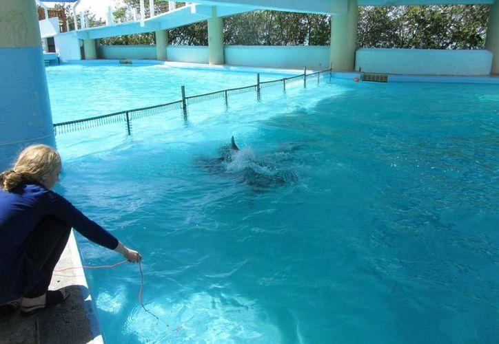 La bióloga estudia las muestras de sonidos tomadas en los tanques al aire libre de los delfinarios. (Cortesía)