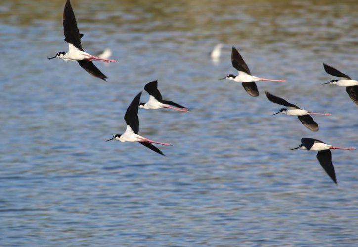 Ochenta especies de aves han sido observadas en el Cozumel Country Club. (Gustavo Villegas/SIPSE)