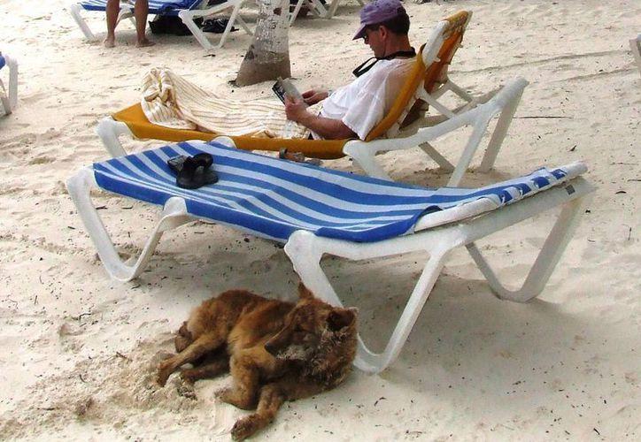 Los dueños de las mascotas deben de cumplir con el reglamento del municipio. (Rossy López/SIPSE)
