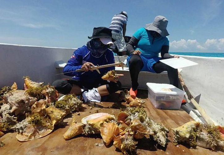 Pescadores aseguran que si no obtienen permisos, capturarán el caracol de manera ilícita. (Foto: contexto/ SIPSE)