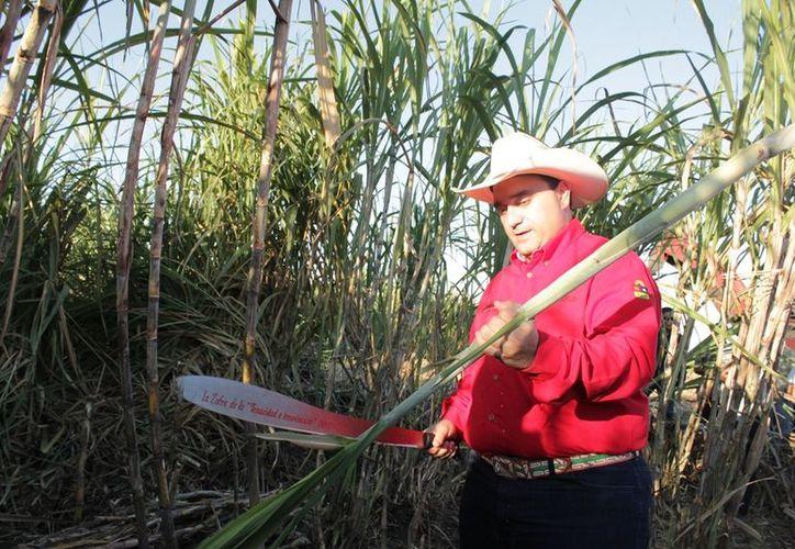 """En el ejido Allende, el jefe del Ejecutivo estatal dio el machetazo del inicio de la zafra """"La Tenacidad y la Innovación"""", en la que se espera cosechar un millón 907 mil 144 toneladas de caña. (Edgardo Rodríguez/SIPSE)"""