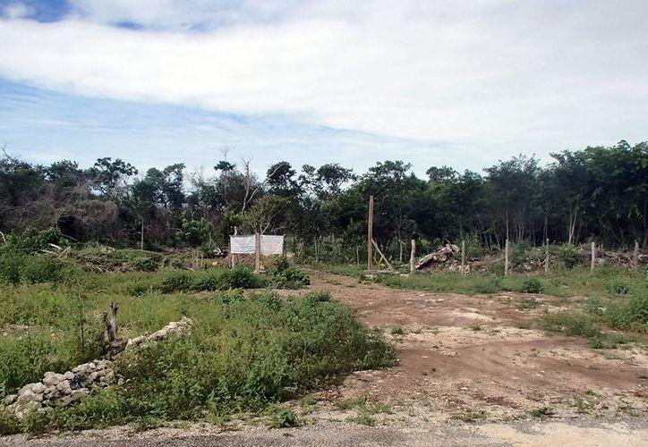 En la gráfica se aprecian los daños causados a las especies de flora protegidas, tras realizarse la deforestación en el rancho El Rocío y El Porvenir. (Juan Palma/SIPSE)