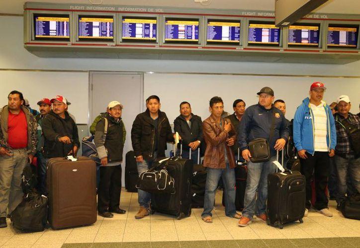 Un grupo de mexicanos al arribar a Canadá este martes para trabajar en granjas agrícolas, como parte del programa de empleo temporal. (Fotos Isabel Inclán/Notimex)