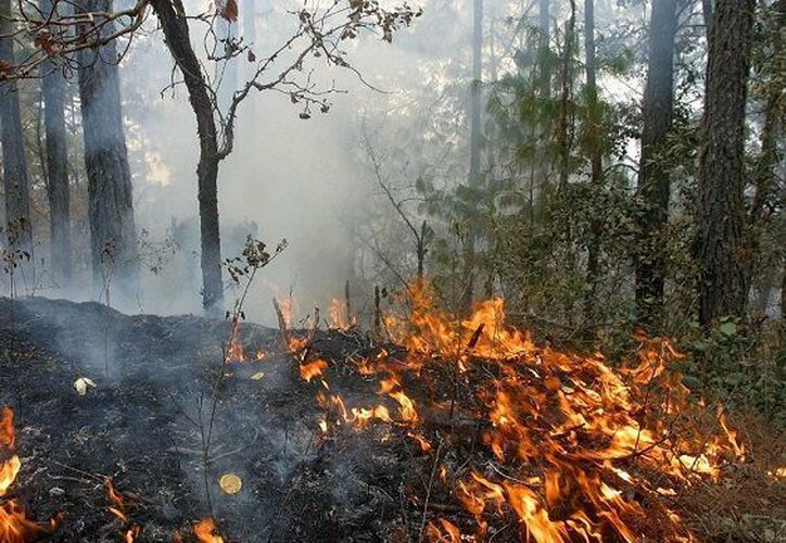 Conafor reportó una disminución de 18.86 por ciento en la ocurrencia de incendios. (Contexto/Internet)