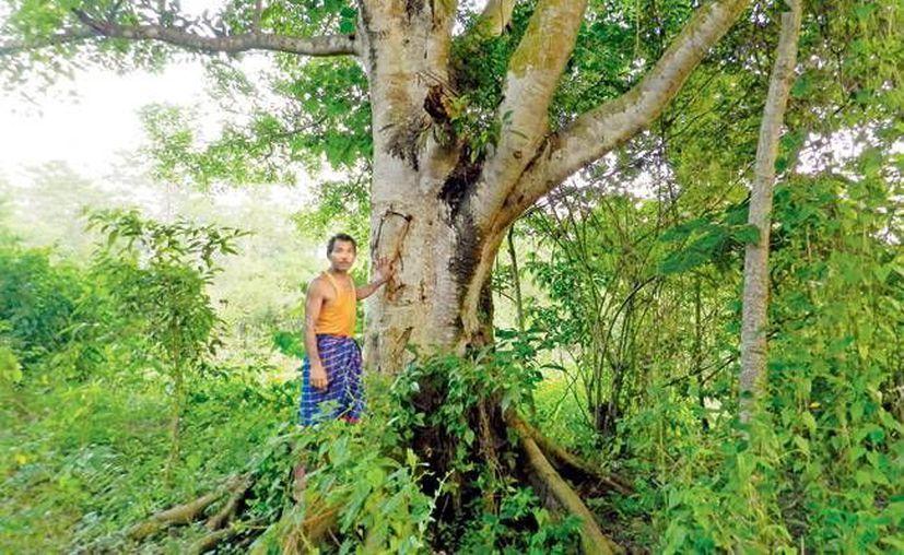 Después de 35 años, la labor de Jadav Payeng resultó en un enorme bosque casi dos veces mayor que el Parque Central de Manhattan. (mid-day.com)