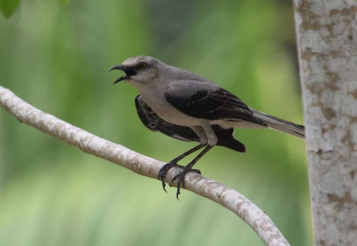 Representantes de la Comisión Nacional de Áreas Naturales Protegidas (CONANP) hicieron mención de que la isla de las golondrinas posee 19 especies endémicas. (Gustavo Villegas/SIPSE)