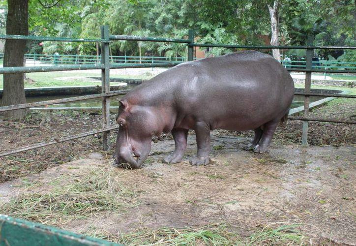 De no presentarse los informes de actividades 2011 y 2012, las instalaciones del zoológico serían clausuradas de manera indefinida. (Enrique Mena/SIPSE)