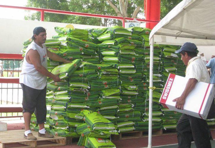 Benefician a mil productores con las semillas en Bacalar. (Javier Ortiz/SIPSE)