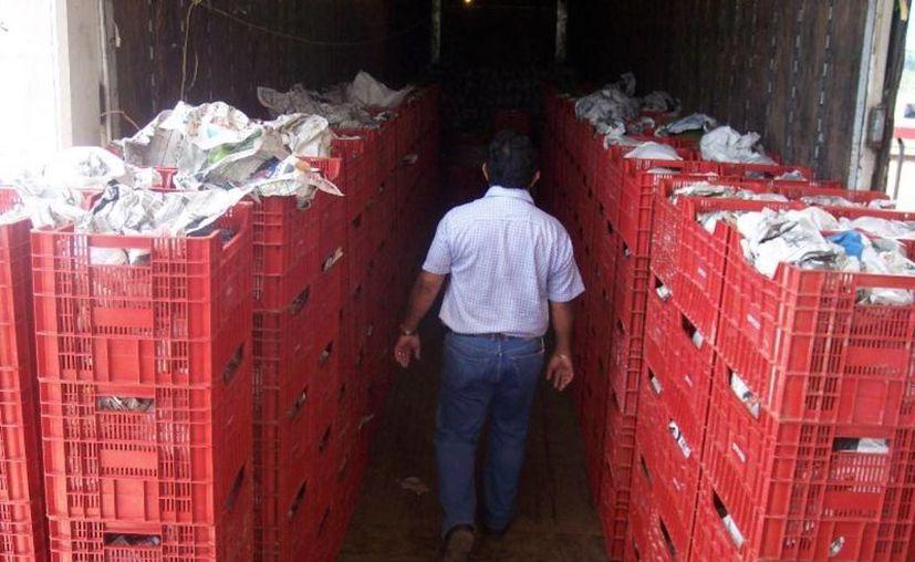 El ingreso de animales vivos, productos o subproductos de origen animal, vegetal, acuícola y pesquero, podrían favorecer la entrada de plagas y enfermedades. (Edgardo Rodríguez/SIPSE)