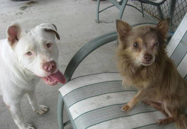 Los simpáticos Chachi y Joanie encontraron un nuevo hogar. (Excélsior)