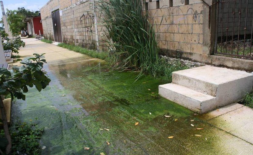 Piden a la ciudadanía mantener áreas libres de agua. (Loana Segovia/SIPSE)