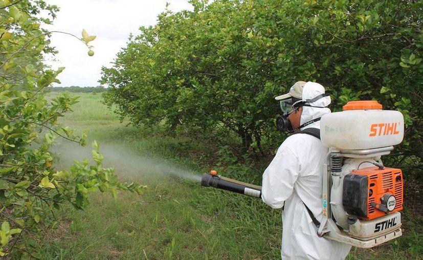 El Comité Estatal de Sanidad Vegetal de Quintana Roo aún espera los recursos que les corresponden. (Edgardo Rodríguez/SIPSE)