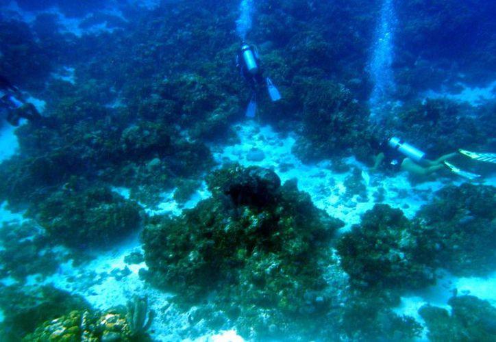 Queda prohibido prestar el servicio de buceo y snorkel en el área. (Luis Soto/SIPSE)