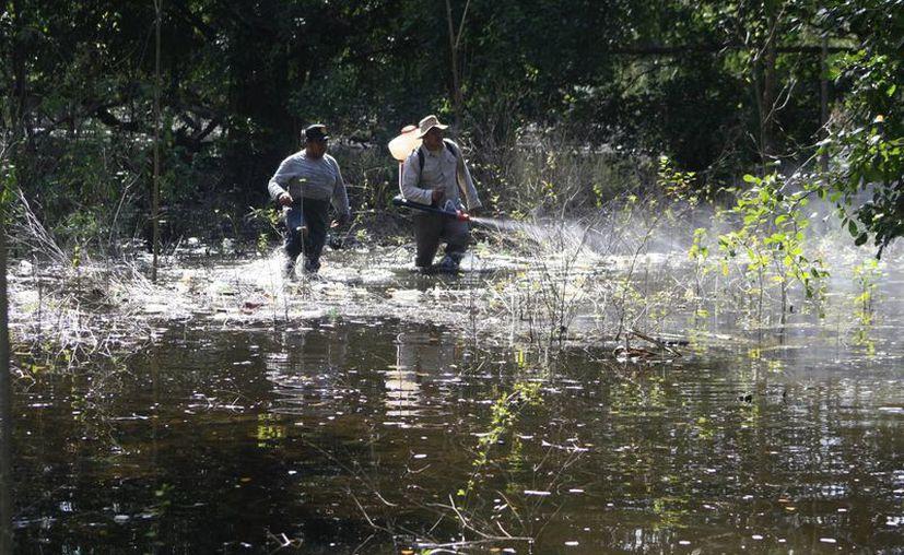 Una de las formas de prevenir el contagio es evitar mantener criaderos del mosquito transmisor en el hogar. (Harold Alcocer/SIPSE)