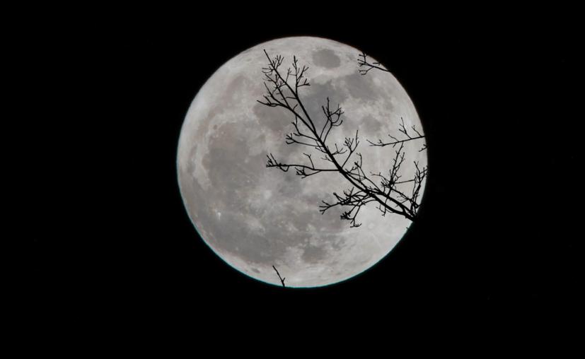 luna-gusano-posdata-digital-press
