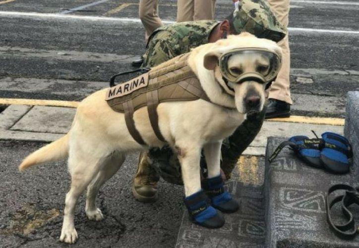 Frida ha dado esperanzas a los mexicanos tras el desastre ocurrido en México el pasado 19 de septiembre. (Foto: Contexto)