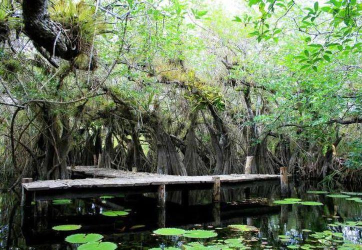 El desarrollo de Cancún le ha costado la pérdida del 70 % de sus selvas, humedales y dunas. (Archivo/SIPSE)