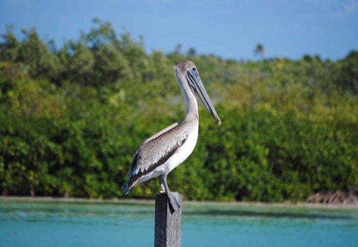 La Reserva de la Biósfera de Sian Ka'an forma parte de los 138 sitios Ramsar en México. (Redacción/SIPSE)