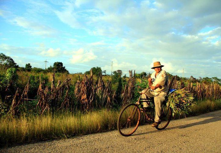 Zonas como la península de Yucatán empiezan a presentar degradación, pese a que no tienen esa condición de sequía por sus características climáticas. (Archivo/SIPSE)