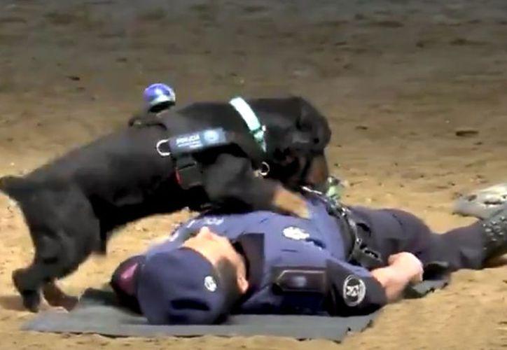 'Poncho', perro policial de Madrid, se convirtió en un héroe para miles de usuarios de redes sociales. (Captura de pantalla/RT)