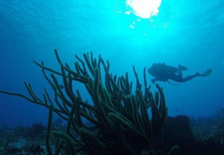 Si bien la creciente aparición del sargazo en las costas del Caribe y el Atlántico fue el fenómeno que convocó a la COI, también estudian la acidificación del océano que cada vez es mayor. (Archivo/SIPSE)