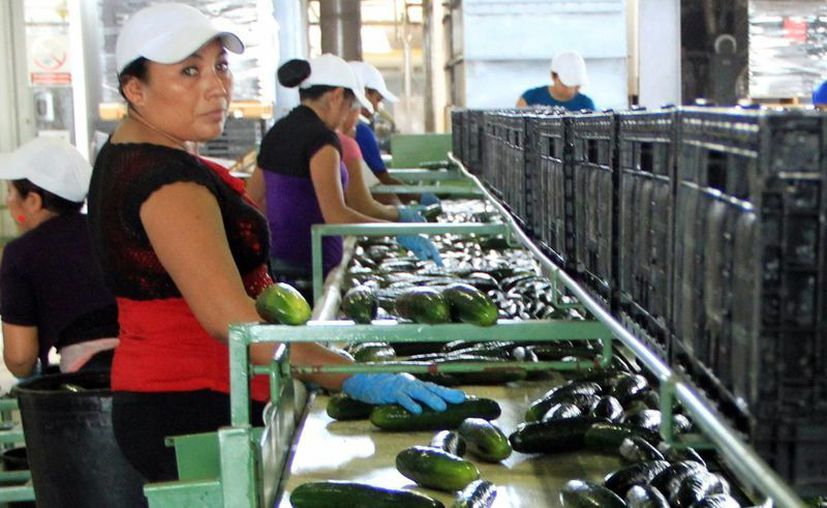 La seguridad y la ubicación geográfica de Yucatán es un imán para la expansión de negocios. (Milenio Novedades)