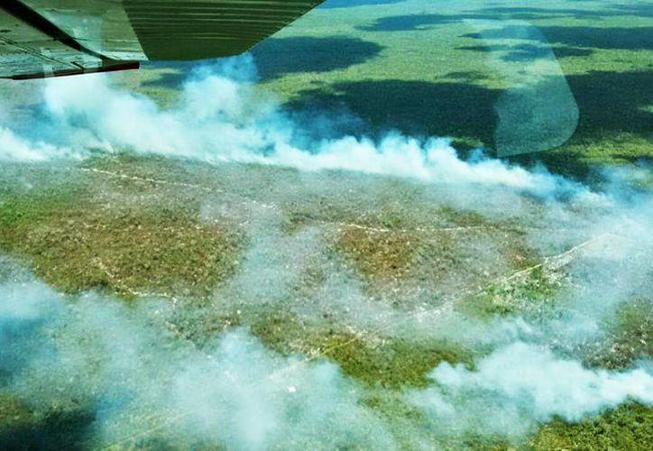 Hasta el momento la Conafor ha sofocado 63 incendios forestales en esta temporada en Quintana Roo. (Redacción/SIPSE)
