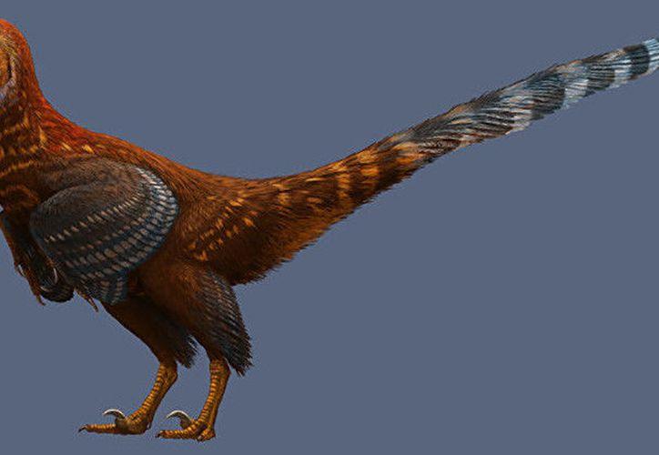El hallazgo de este especie confirma que ese tipo de plumas estaba presente entre los saurios semejantes a los pájaros. (RT)