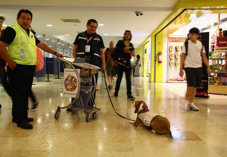 Los viajeros son sometidos a inspecciones para impedir que a través de mercancías transporten plagas o enfermedades. (Gonzalo Zapata/SIPSE)