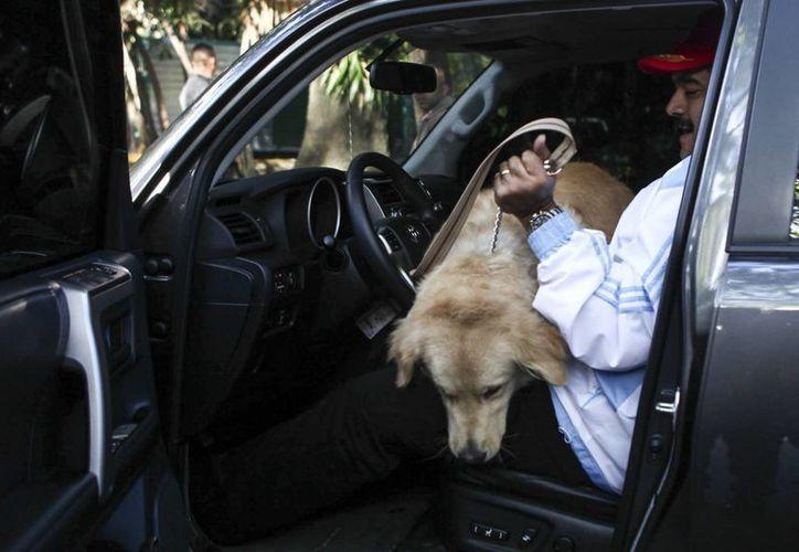 Fotografía cedida por el Palacio de Miraflores que muestra al presidente venezolano, Nicolás Maduro, mientras carga un perro en un vehículo, en Caracas. (EFE)
