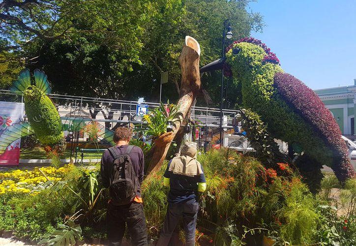 """Además de flores y plantas, los visitantes del """"Camino de las Flores"""" podrán observar verdaderas obras artísticas como la de imagen. (Cristian Cuxín/SIPSE)"""