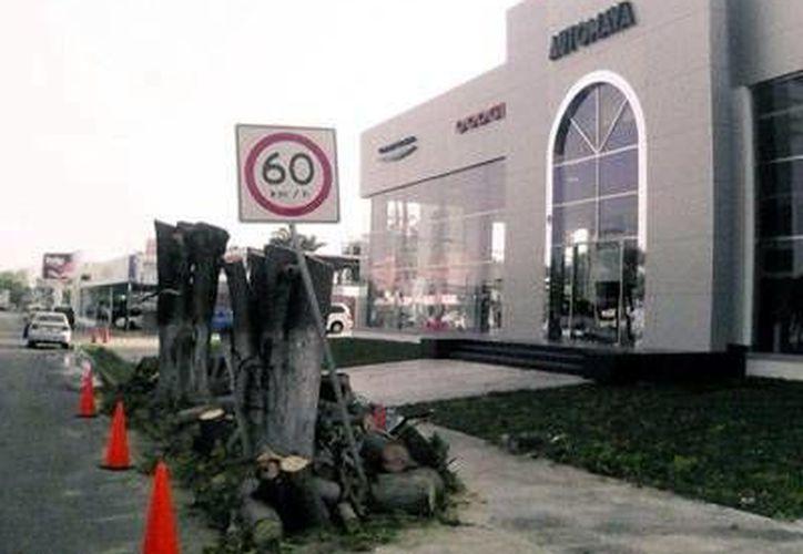 Afuera de la agencia automotriz se pueden ver los troncos de los árboles que fueron talados de manera ilegal. (Milenio Novedades)