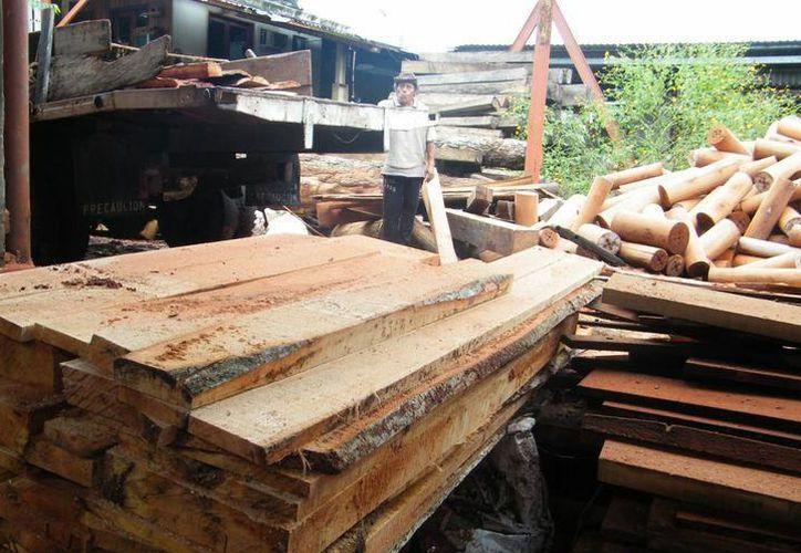 Uno de los problemas principales que enfrenta la industria maderera en el Estado, es que no existe un inventario de la madera que ingresa. (SIPSE)