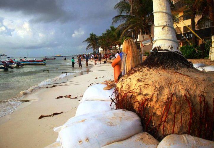La Zofemat ha detectado palmeras a punto de caer debido a la erosión. (Daniel Pacheco/SIPSE)