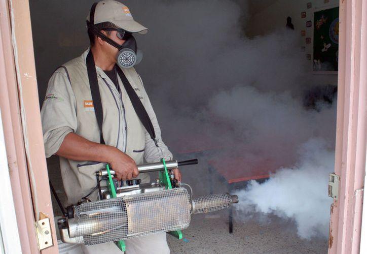 El mosco se reproduce en agua limpia si es portador de dengue, zika y chikungunya.  (Redacción/SIPSE)