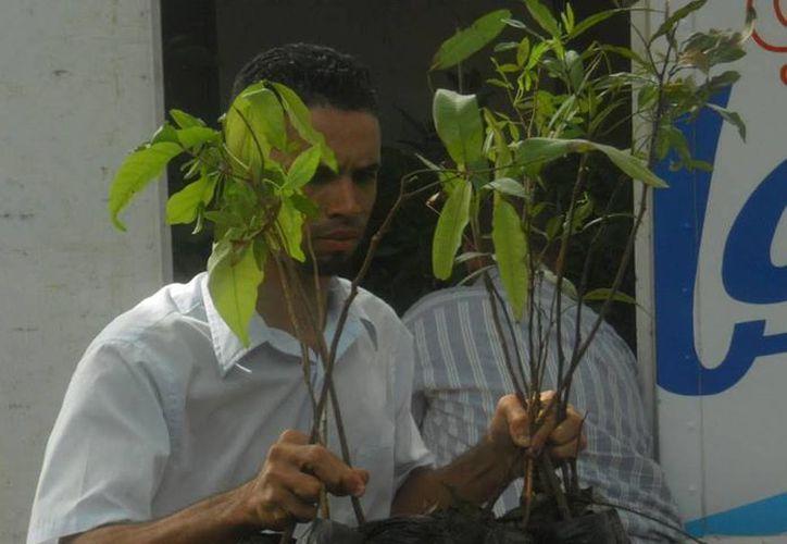 Entregaron varias especies frutales, así como fresno y pino. (imagui.com)