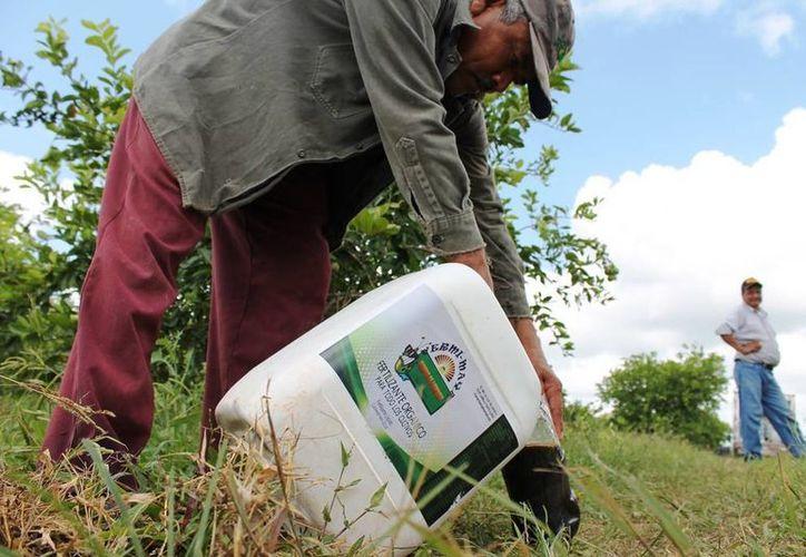 Temen la pérdida total de la cosecha por la sequía. (Edgardo Rodríguez/SIPSE)